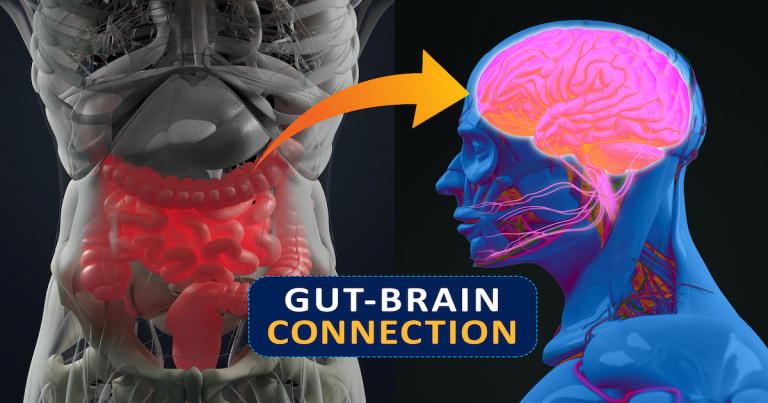 Gut-brain Connection Or Gut Brain Axis. Concept Art Showing A Connection From The Gut To The Brain.